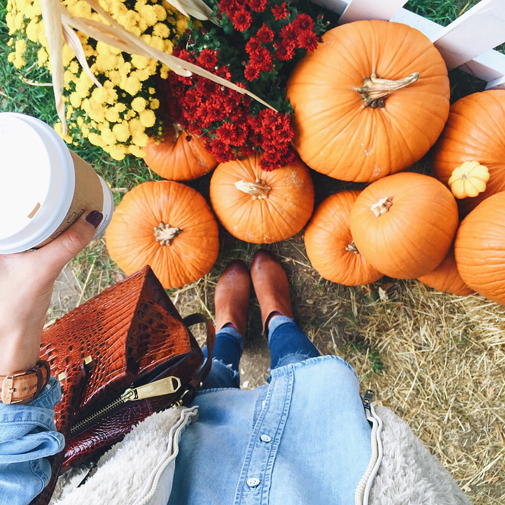 livvyland-blog-olivia-watson-newport-rhode-island-harbor-sailboats-travel-blogger-fall-pumpkin-patch